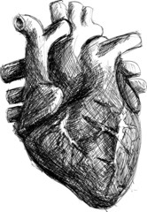Hand drawn realistic human heart sketch black and white