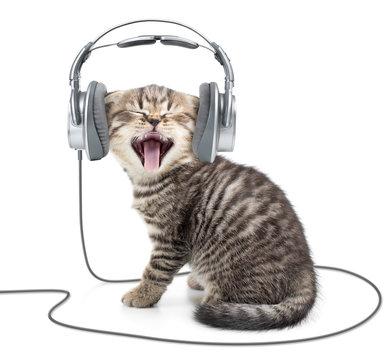 Singing kitten cat in wired headphones listening to music