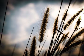 Flower grass background