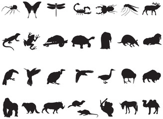 many animals and insects in vector