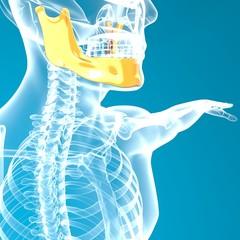 Mandibola osso testa ai raggi x