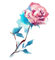 rose watercolor sketch. Vector illustration.
