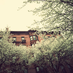 New York City Spring