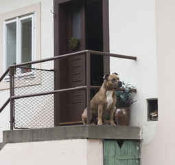The dog at the door