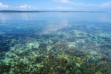 Clear water with coral reef below sea surface