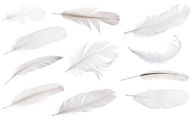 set of eleven light grey feathers isolated on white Fotoväggar
