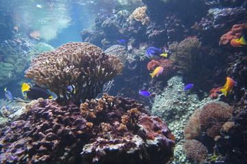 Korallen und Fische