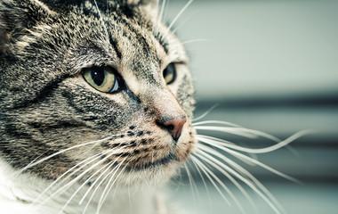 Cute cat face portrait. Adorable kitten series.