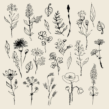 Floral set  hand drawn