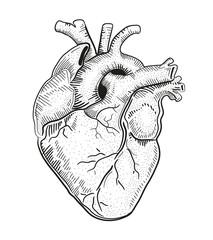 Heart a