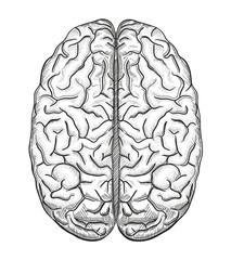 Brain a