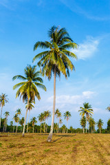 Tropical landscape of a palm tree in Thailand