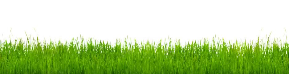 Frühlingswiese, Wiese, Freisteller