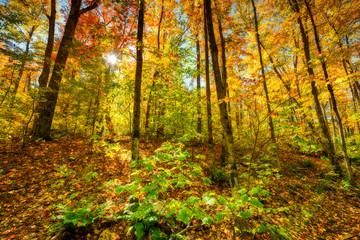 Sun Light in an Autumn Forest