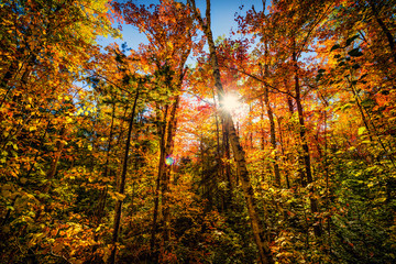 Autumn Forest Glow