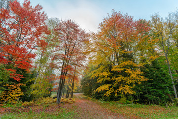 Driveway Through Colorful Autumn Trees - Wide Angle