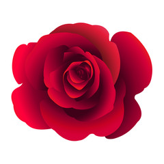 Single rose flower. Vector.