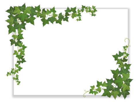 paper sheet decorated ivy