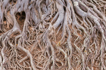 root of tree texture