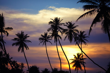 Silhouettes of palm trees at sunset