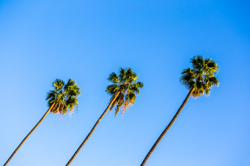 palms in a row