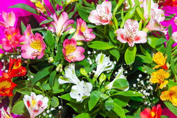 image Floral background from plants Alstroemeria
