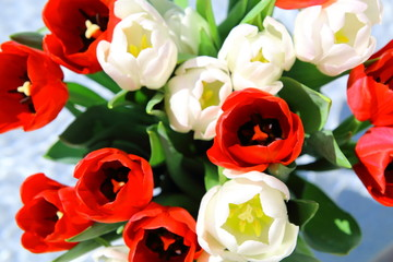 Bunch of red and white tulips