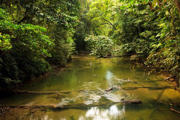 Small river in jungle