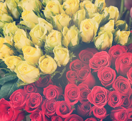 red and yellow roses, background and texture