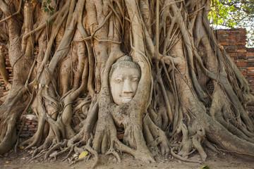 Buddha head and tree Ayutthaya, Thailand