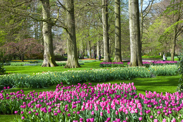 Fototapete - Tulips Garden Keukenhof
