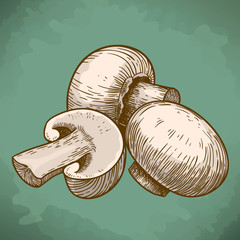 engraving illustration of tree mushrooms champignons