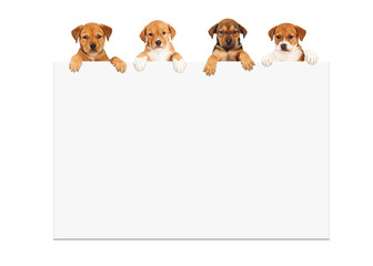 Wall Mural - Puppies Hanging Over White Sign