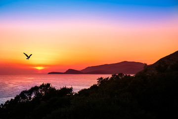 hovering raptor with a beautiful sunset over the ocean