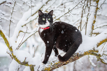 Adult black and white cat sitting on the tree in winter