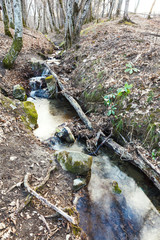 stream in mountain forest in spring