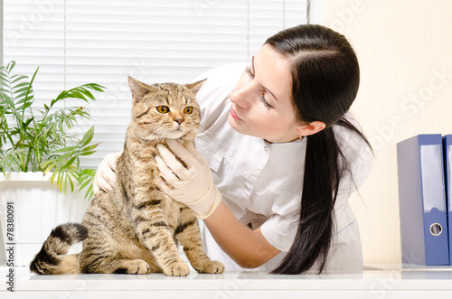 cat urinating beside litter box