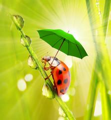 Little ladybug with umbrella.