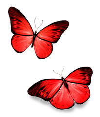 Two red butterflies on white