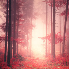 Wall Mural - Red mystic color forest
