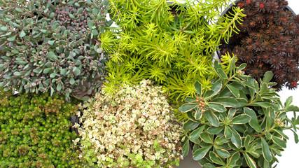 bilder und videos suchen: steingartenpflanzen, Gartenarbeit ideen