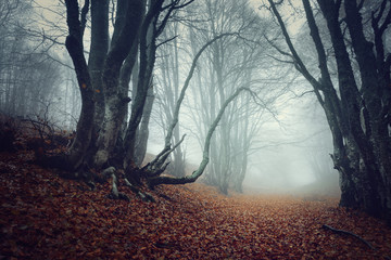 Photo sur Toile Taupe Mysterious autumn forest in fog