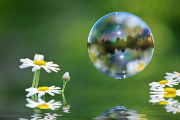 Seifenblasen, Margeriten und Wasser