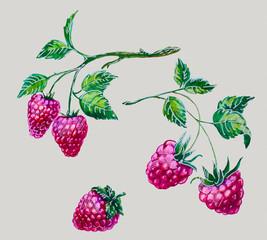 watercolor raspberries
