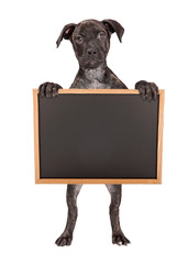 Wall Mural - Brindle Puppy Standing Holding Blank Chalkboard