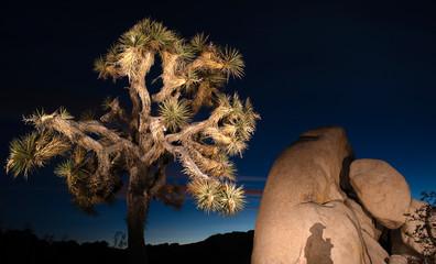 Sunset Shadow Rock Formation Joshua Tree National Park