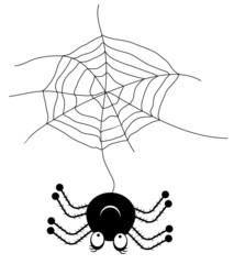 Black spider with cobweb