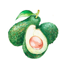 the avocado watercolor isolated on the white background