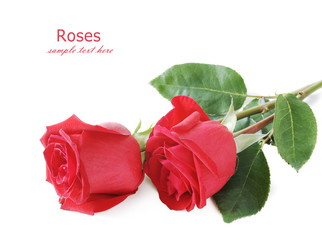 Red roses bunch isolated on white background