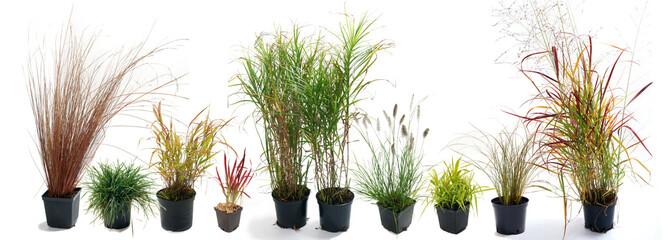 The most beautiful ornamental grass garden